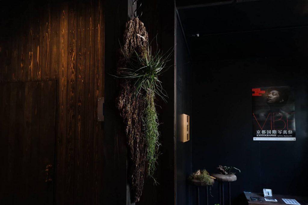 test2 bonsai