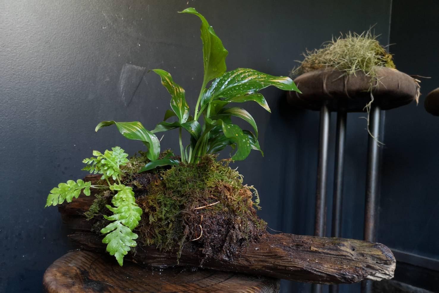 test-bonsai